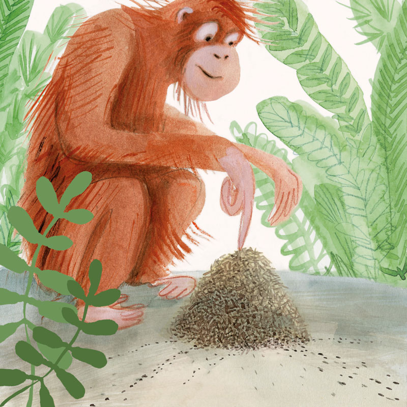 monkey orangutan illustration ideeHB